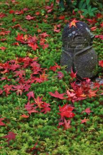 京都圓光寺の地蔵の写真・画像素材[770142]