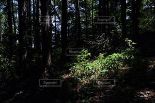 スポットライトの写真・画像素材[768081]