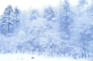 雪に覆われた木の写真・画像素材[2811262]
