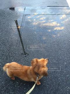 雨の日の散歩の写真・画像素材[824098]