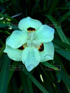 花の写真・画像素材[834531]