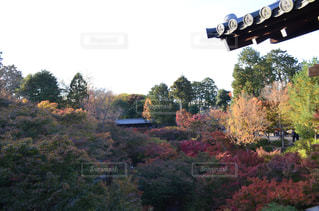背の高い木のグループの写真・画像素材[863832]
