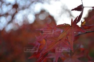近くの木のアップの写真・画像素材[863869]