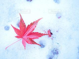 雪と紅葉 - No.864662