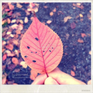 落ち葉の写真・画像素材[870014]