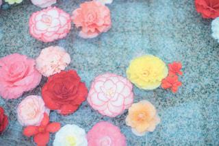 花,ピンク,水,可愛い,flower,パステルカラー,おしゃれ,ベゴニア,浮かぶ,ファンシー