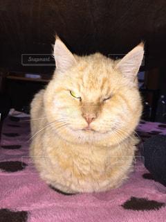 敷物の上に横たわる猫 - No.982398