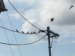 空を飛んでいる鳥の群れの写真・画像素材[1317401]