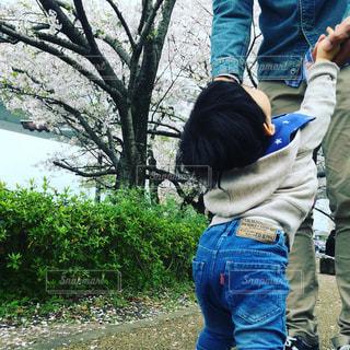 公園,春,桜,親子,散歩,子供,樹木,人物,抱っこ,思い出,コーデ,ジェスチャー