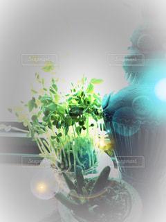 近くにある花と花瓶のの写真・画像素材[983213]