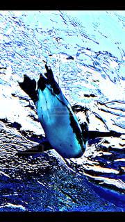 水の中の鳥の写真・画像素材[1213567]