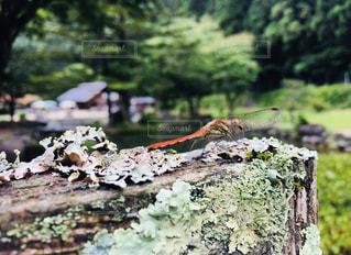 夏を惜しむ…の写真・画像素材[1431194]