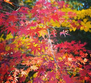 カラフルな花の木から栽培 - No.869640