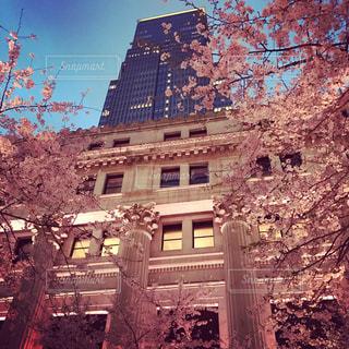 歴史的建造物の前に咲く桜 - No.812283