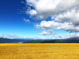 青空と雲と黄金の稲穂の写真・画像素材[2417341]