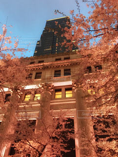建物,花,春,桜,夜空,木,花見,夜桜,街,イベント