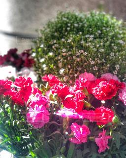 陽射しを浴びる花の写真・画像素材[3071196]