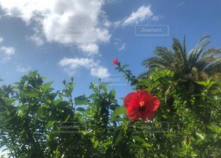 初島アイランドリゾートの青空と緑と花の写真・画像素材[3143603]