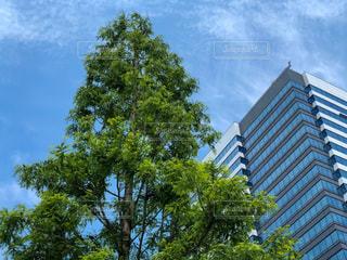 新しい高層ビルと新緑の写真・画像素材[3282784]