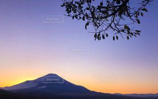 トワイライト時の富士山と木のシルエットの写真・画像素材[3340302]
