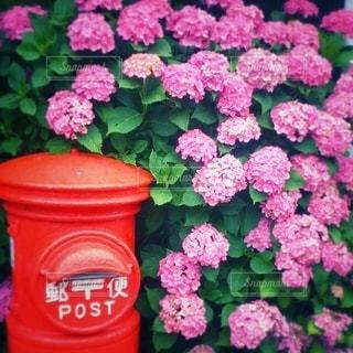 郵便ポストと紫陽花のコラボの写真・画像素材[3382310]