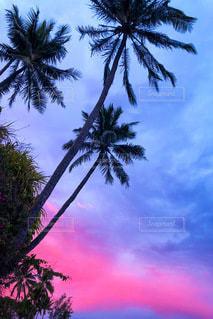 ハワイのヤシの木と夕暮れの写真・画像素材[3401025]