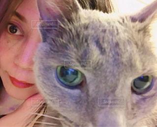 近くにカメラを見て猫のアップの写真・画像素材[982007]