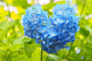 近くの花のアップの写真・画像素材[782198]