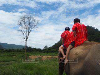 風景,景色,旅行,ゾウ,象,タイ,海外旅行,チェンマイ,初体験