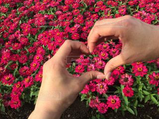 花,LOVE,楽しい,愛,思い出,ディズニー,ハンドサイン