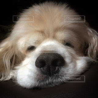 近くに犬のアップの写真・画像素材[1004112]