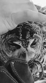 フクロウの頭を撫でているところ♡ - No.818066