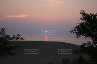 背景の夕日とツリーの写真・画像素材[1310540]