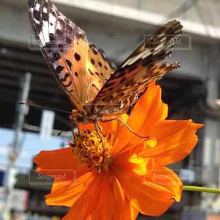 近くの花のアップの写真・画像素材[1038477]