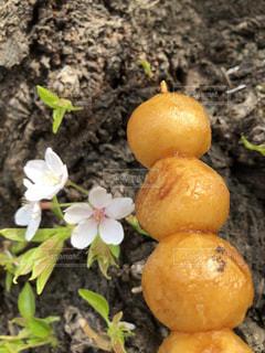 桜,日本の絶景,樹木,ソメイヨシノ,さくら,ダンゴ