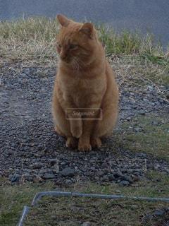 招き猫っぽいでしょ?の写真・画像素材[1273752]