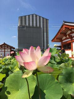 近くの花のアップの写真・画像素材[1123259]
