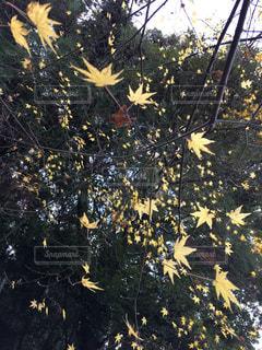木の花の花瓶の写真・画像素材[1124322]