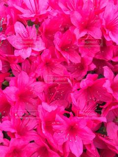 近くの花のアップの写真・画像素材[1128180]