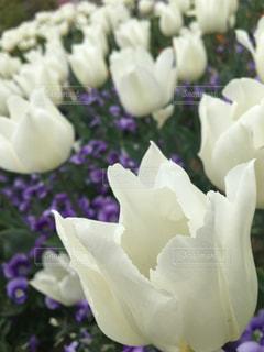近くの花のアップの写真・画像素材[1128315]