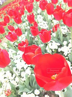 近くの花のアップの写真・画像素材[1128540]