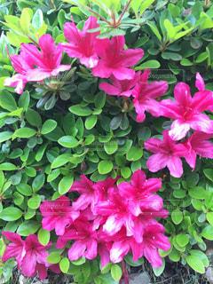 近くの花のアップの写真・画像素材[1128542]