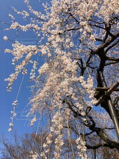 近くの木のアップの写真・画像素材[1128643]