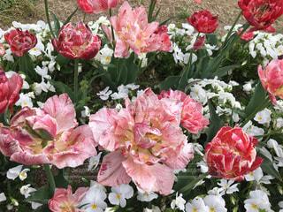 近くの花のアップの写真・画像素材[1128788]
