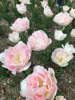近くの花のアップの写真・画像素材[1128790]