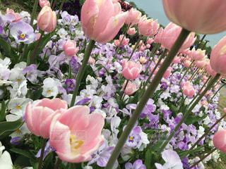 近くの花のアップの写真・画像素材[1140375]
