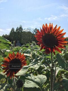 近くの花のアップの写真・画像素材[1151617]