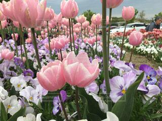 紫色の花一杯の花瓶の写真・画像素材[1405186]