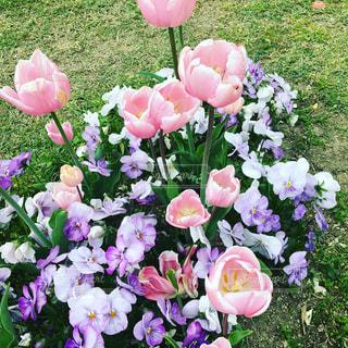 ピンク,癒し,可愛い,青空の下,ピンクだらけ