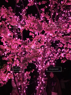 夜,ピンク,可愛い,電飾,さくら